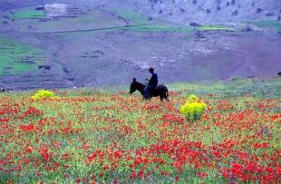 berber strolls TL3