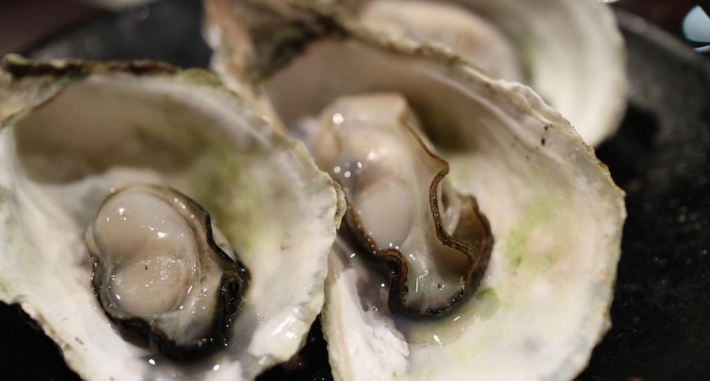 oyster pixa